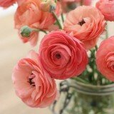 most beautiful flowers 1