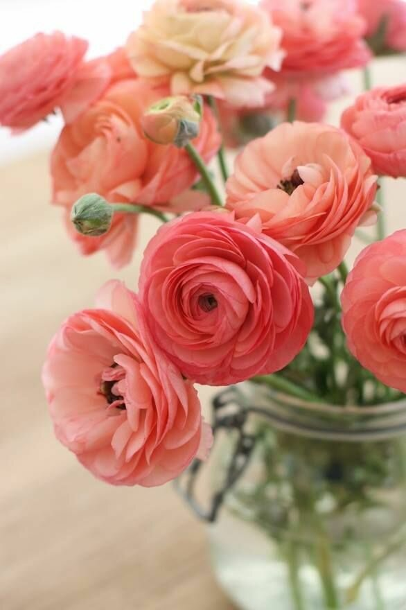 24 Most Beautiful Flowers In This Gallery | MostBeautifulThings