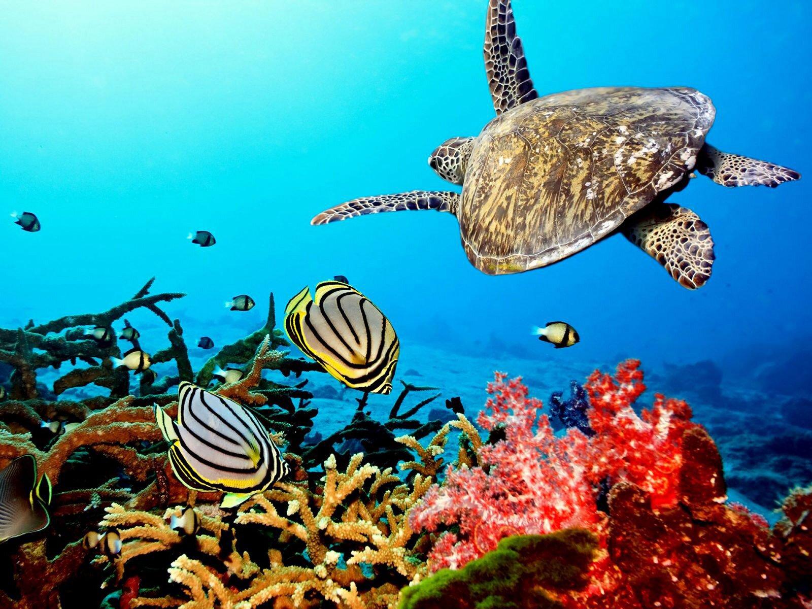 15 pics of amazing coral reefs and fishes for Sfondo animato pesci