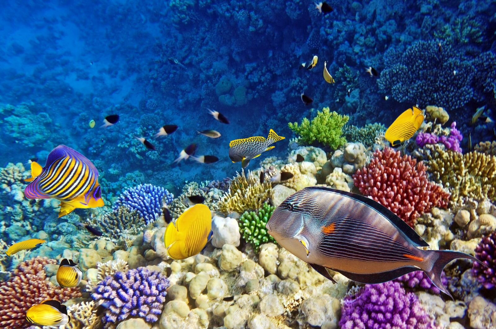 15 Pics Of Amazing Coral Reefs And Fishes