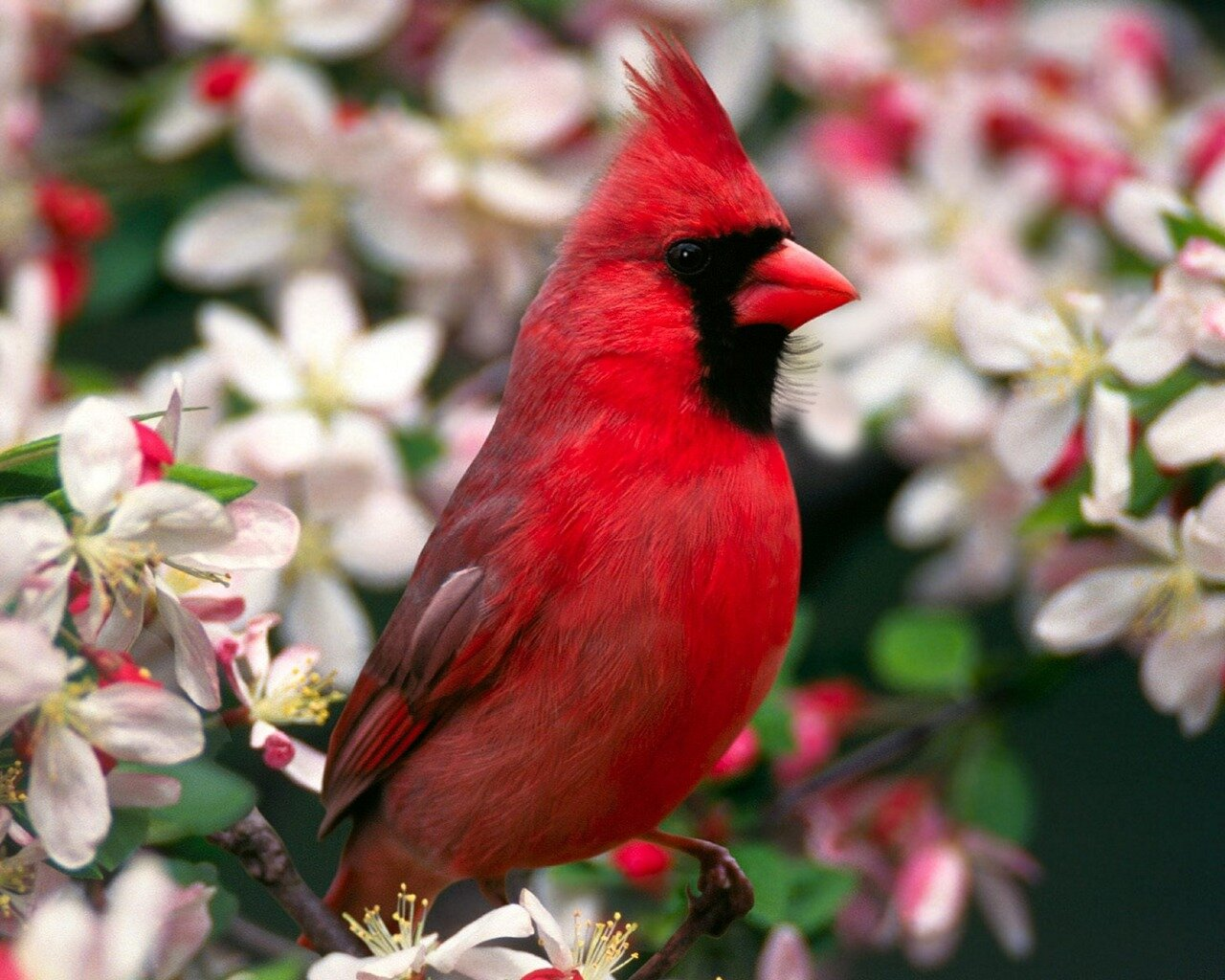 beautiful birds 81 1024x819 Beautiful Birds