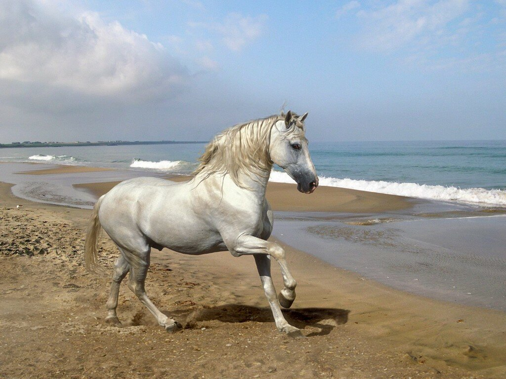 Top 13 Photos Of Beautiful Horses | MostBeautifulThings - photo#38