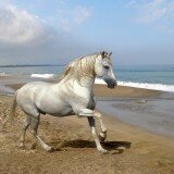 beautiful horses 12