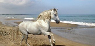 beautiful horses 12 326x159