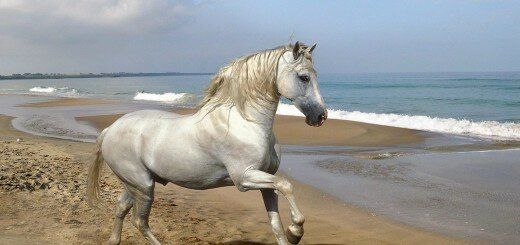 beautiful horses 12
