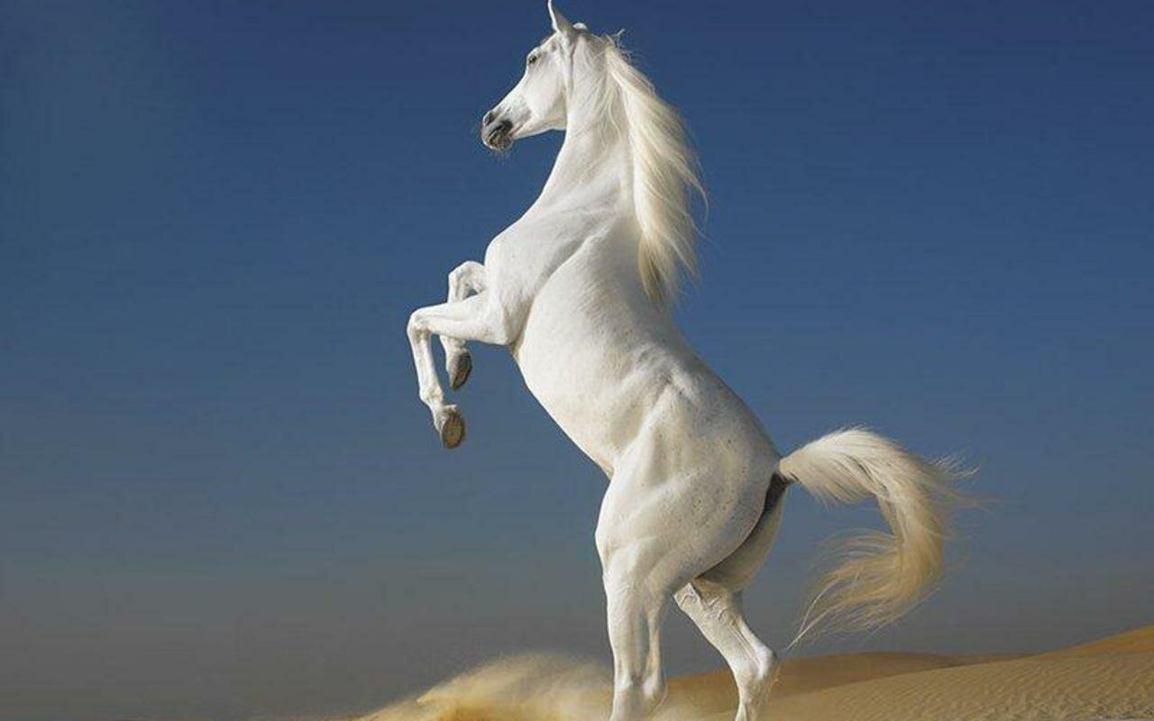 top 13 photos of beautiful horses mostbeautifulthings