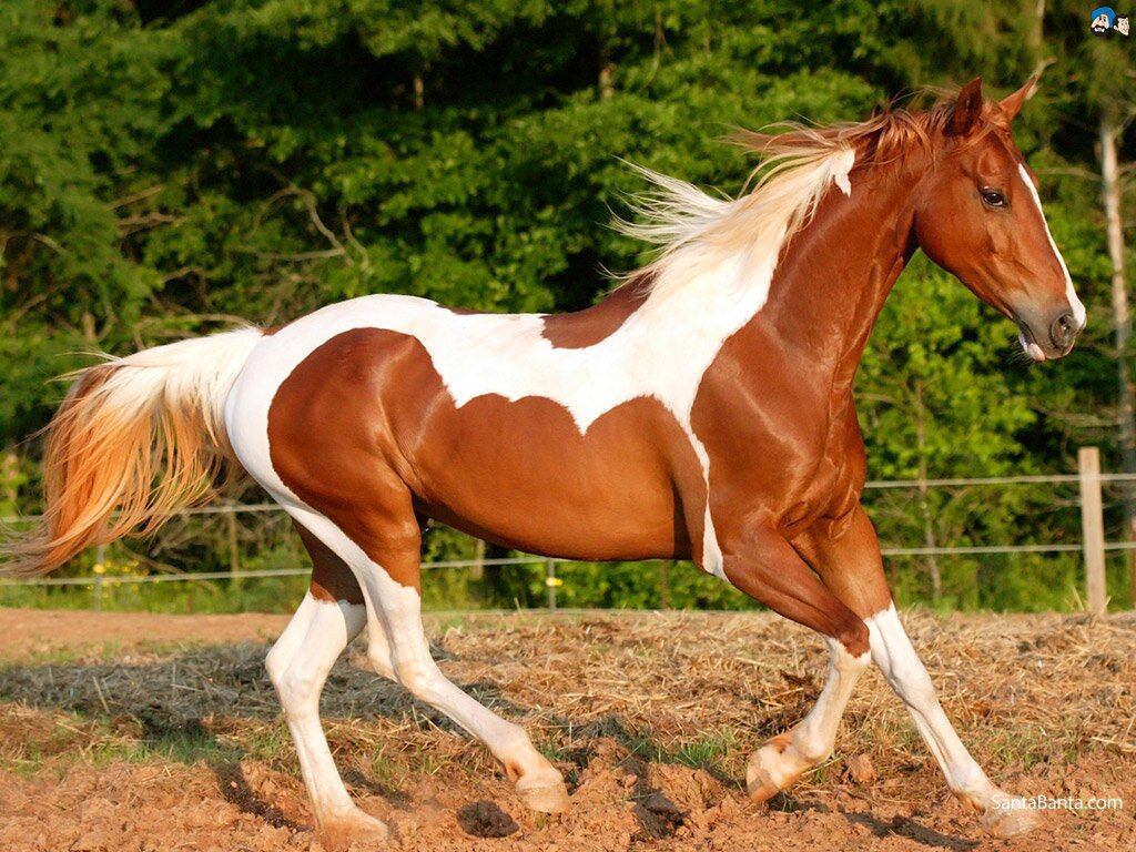 Top 13 Photos Of Beautiful Horses | MostBeautifulThings - photo#12