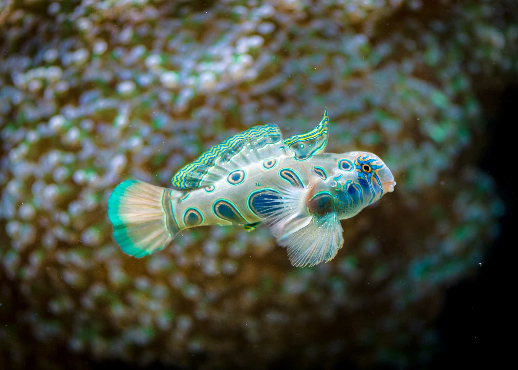 the 16 most beautiful fish pictures mostbeautifulthings