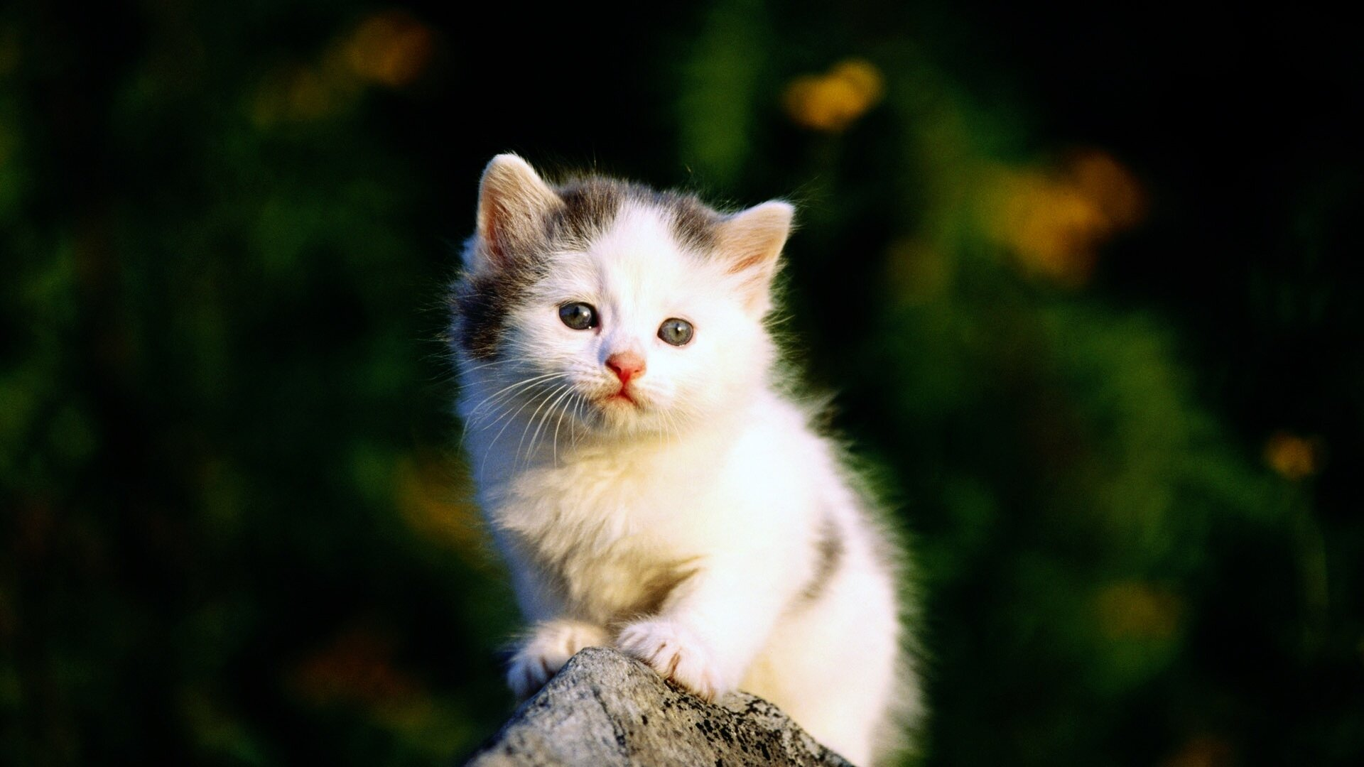 15 pictures of cute and sweet cats mostbeautifulthings