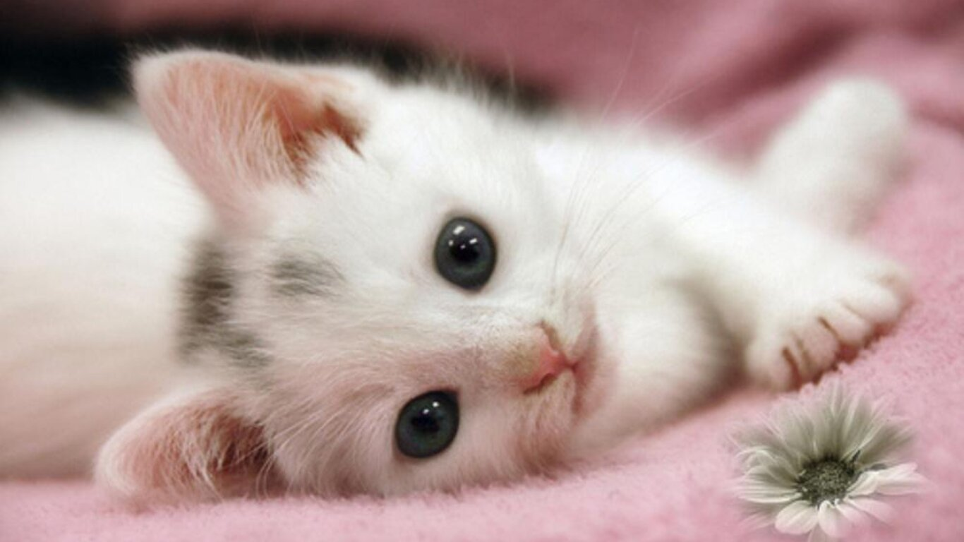 15 Pictures Of Cute And Sweet Cats | MostBeautifulThings