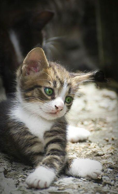 Sweet Cat Nude Photos 24
