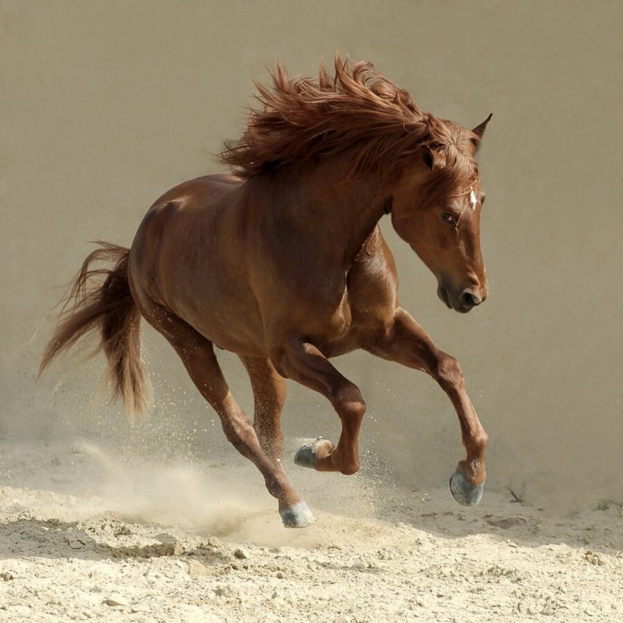 Top 19 Photos Of Arabian Horses | MostBeautifulThings - photo#3