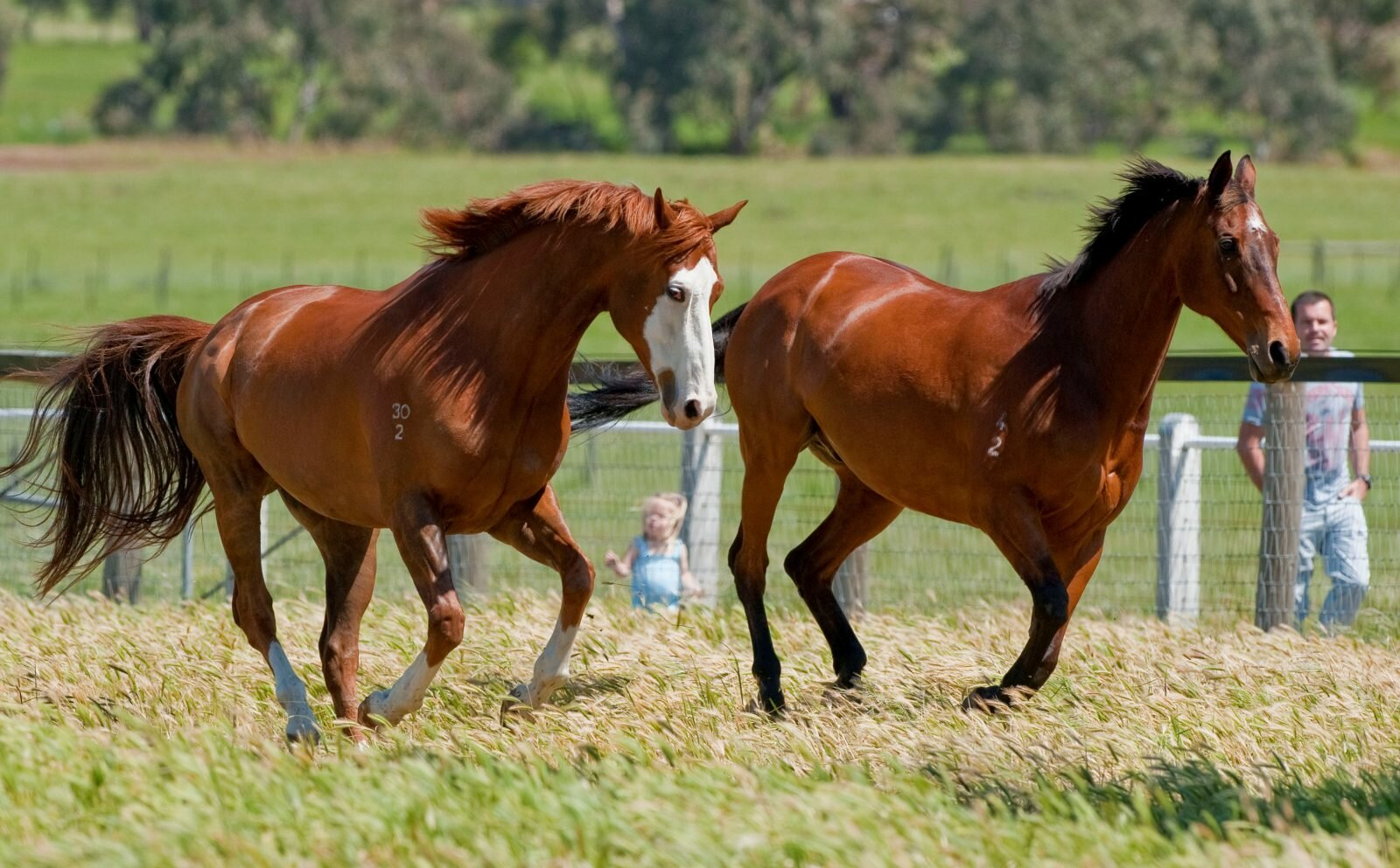 17 Great Pictures Of American Horses