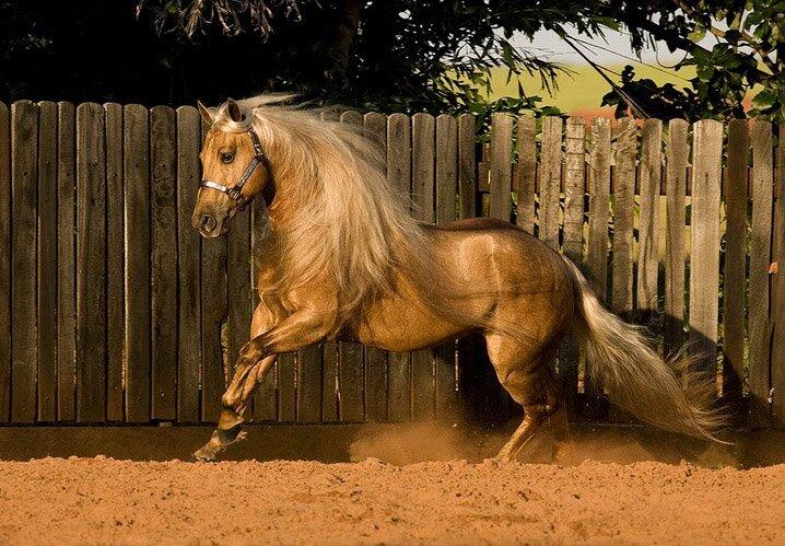 best horse porn