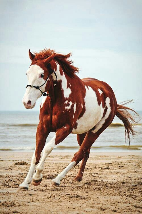The 21 Best Horse Photos Of All Time   MostBeautifulThings