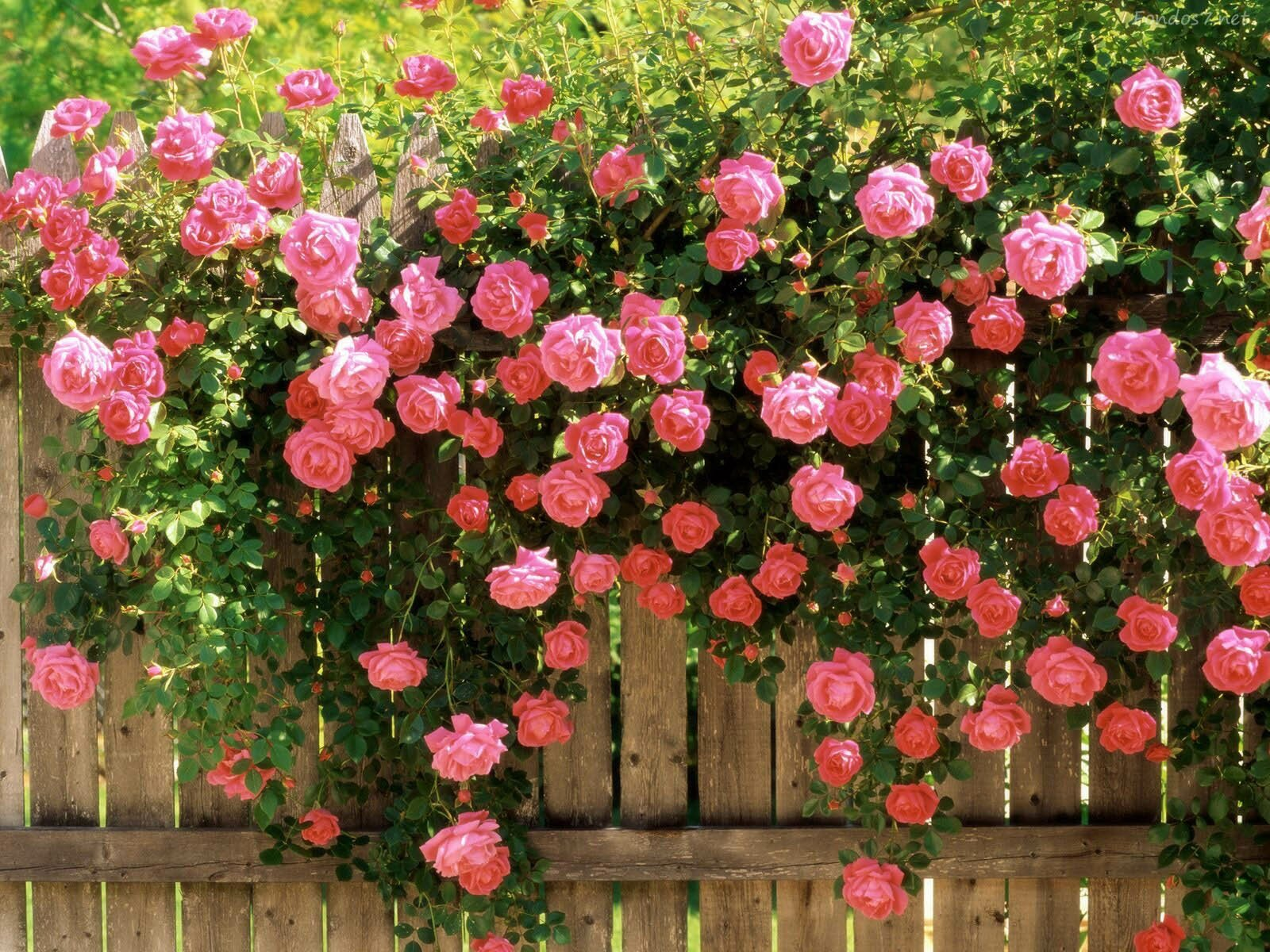 16 Flower Gardens That Will Warm Your Heart MostBeautifulThings