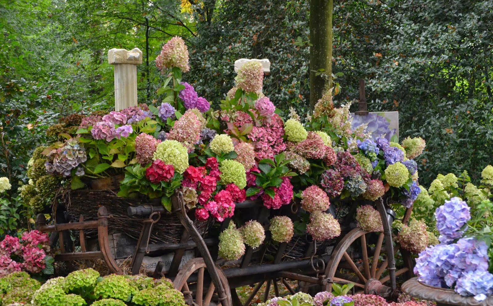 Pin beautiful flower garden wallpapers facebook covers for Beautiful flower landscapes