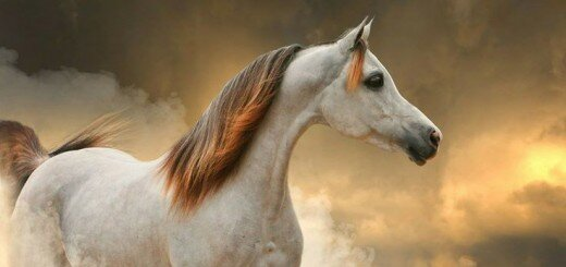 most beautiful horse pictures