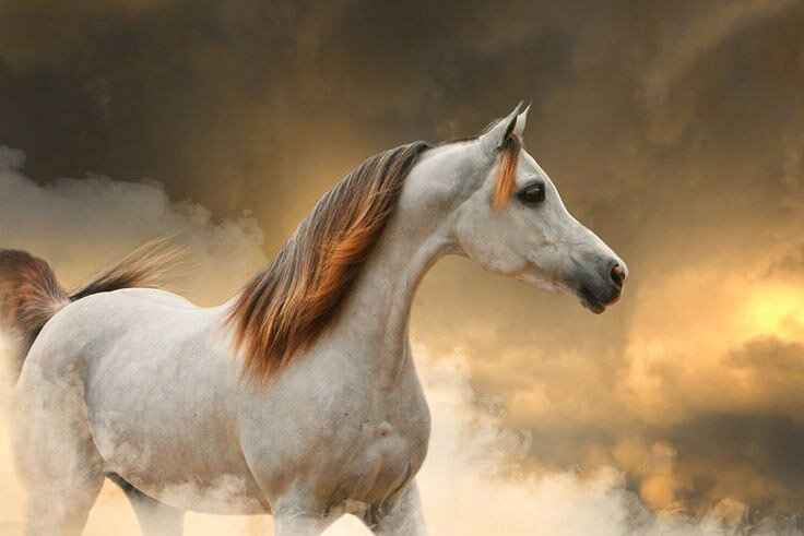 Top 24 Horse Pictures Ever | MostBeautifulThings - photo#37