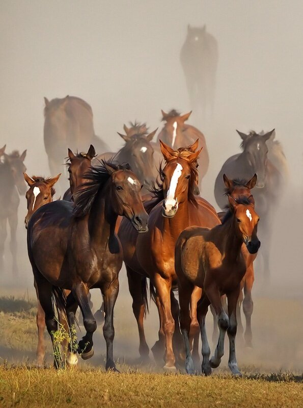 how to choose horses to bet on