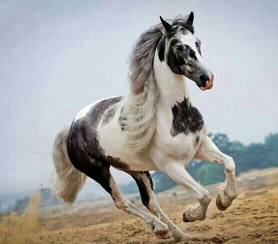 Top 24 Horse Pictures Ever   MostBeautifulThings Pictures Of Horses