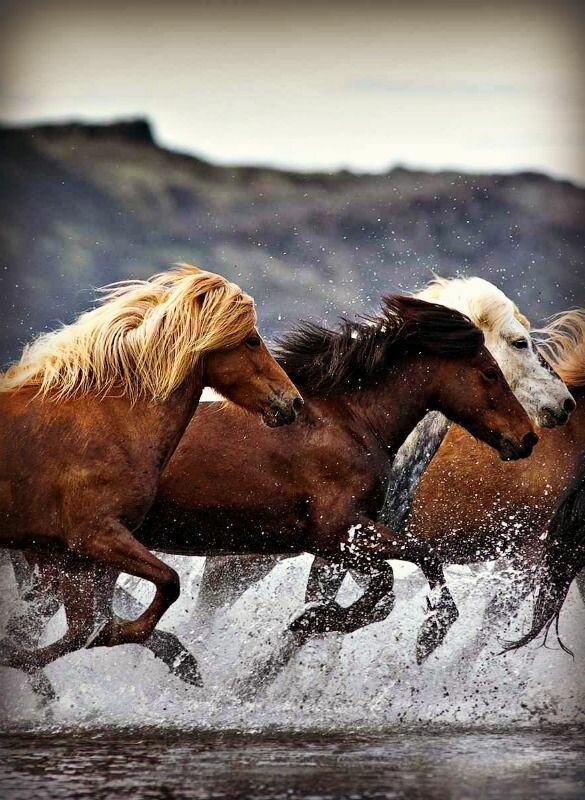 Top 24 Horse Pictures Ever | MostBeautifulThings