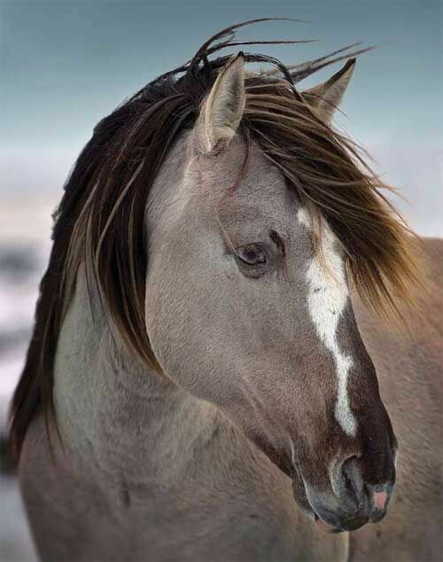 Top 24 Horse Pictures Ever | MostBeautifulThings - photo#42