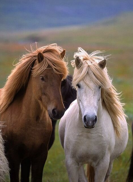 Top 24 Horse Pictures Ever | MostBeautifulThings - photo#14