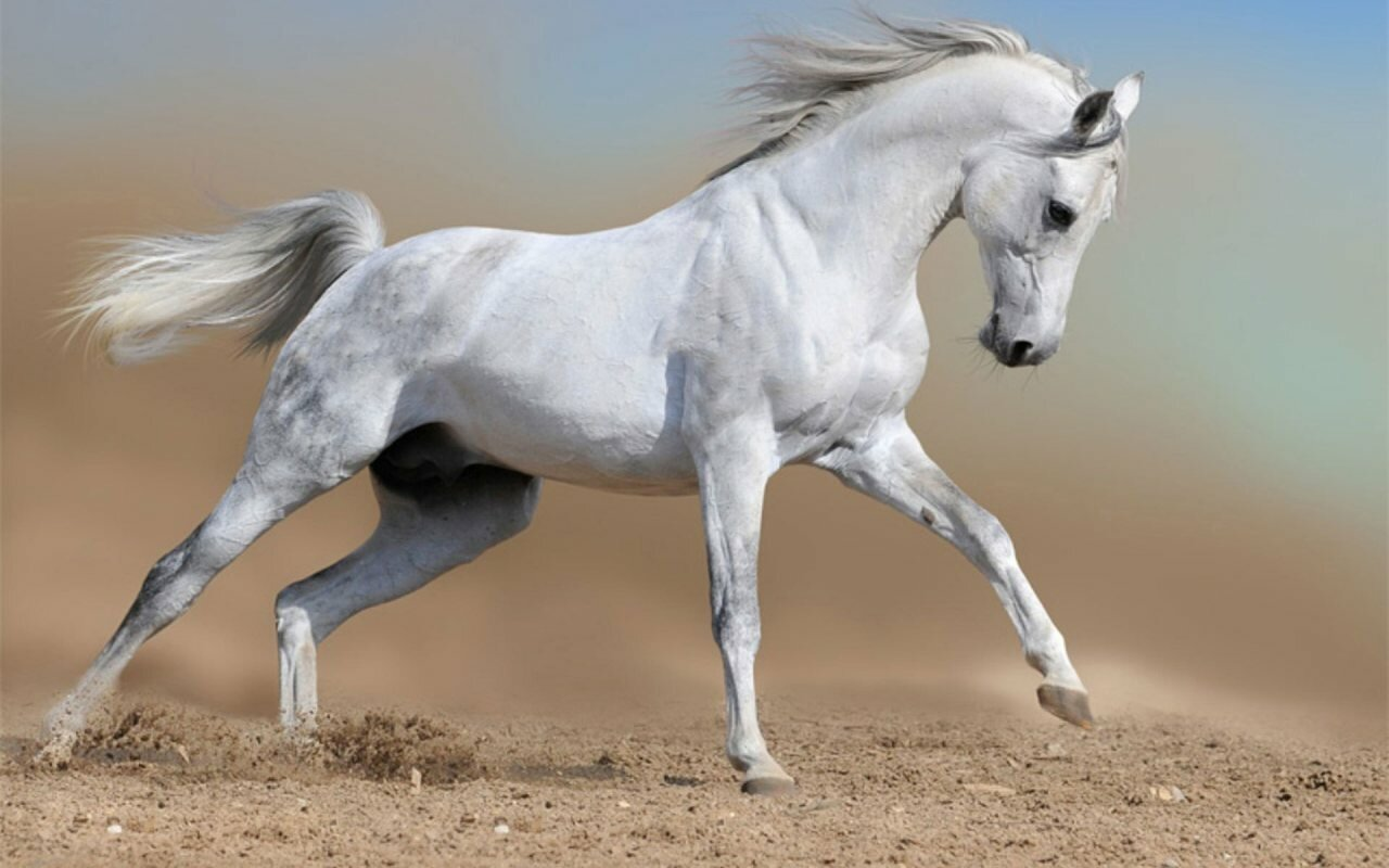 wild horses with 20 perfect photos mostbeautifulthings
