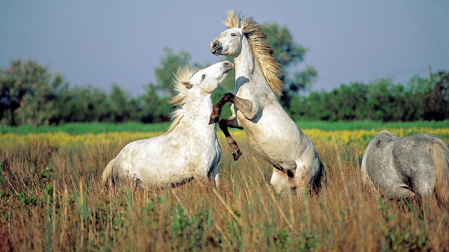 Wild Horses With 20 Perfect Photos | MostBeautifulThings - photo#50