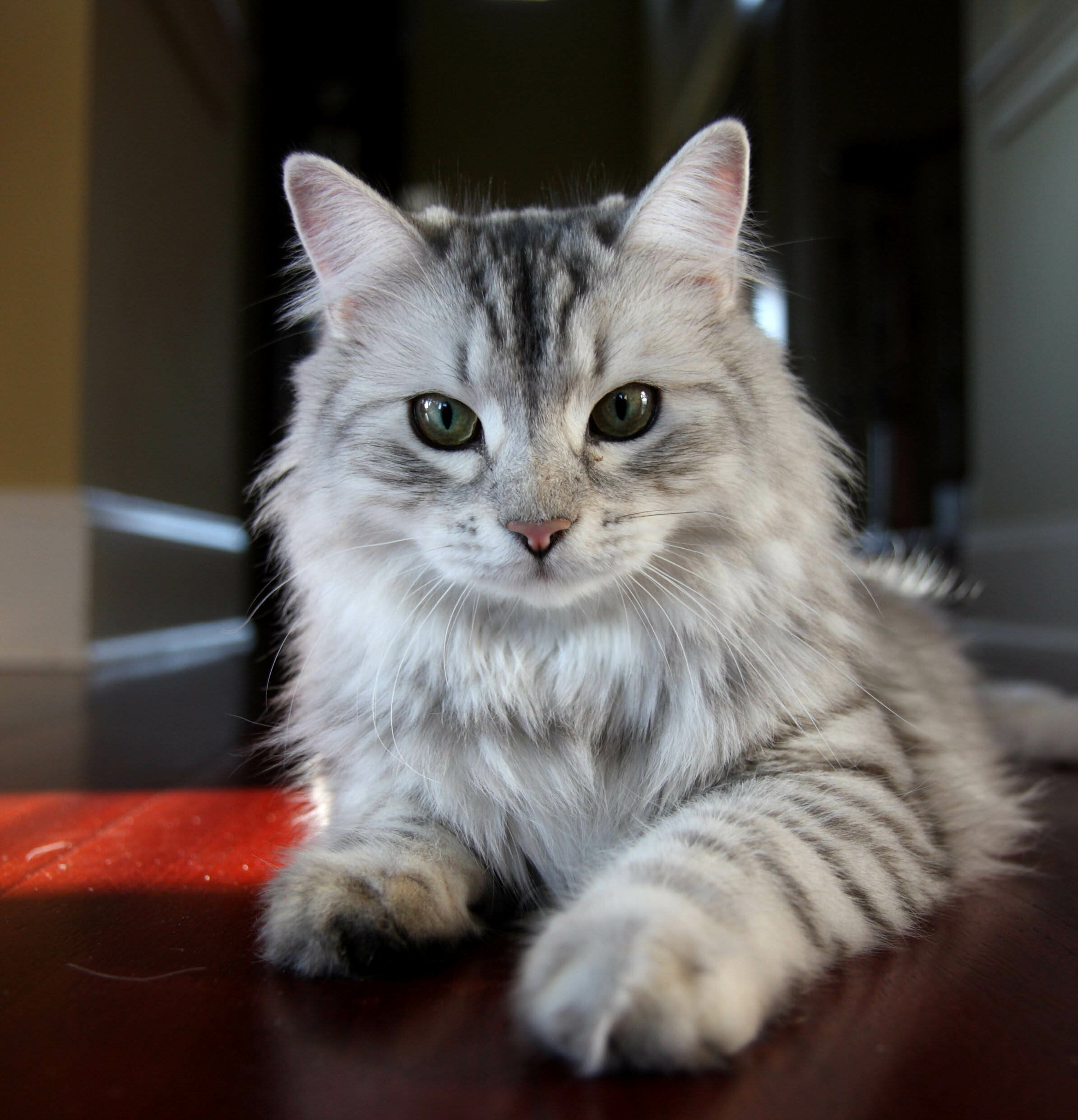 beautiful cats with the 16 best pictures mostbeautifulthings