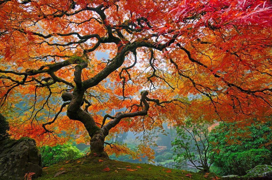 the 14 worlds most beautiful trees mostbeautifulthings