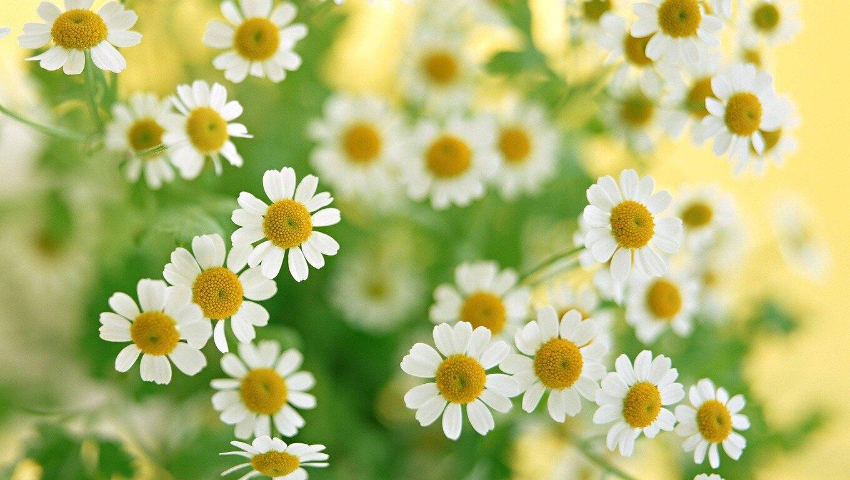 15 Inspiring Daisy Flower Photos Mostbeautifulthings
