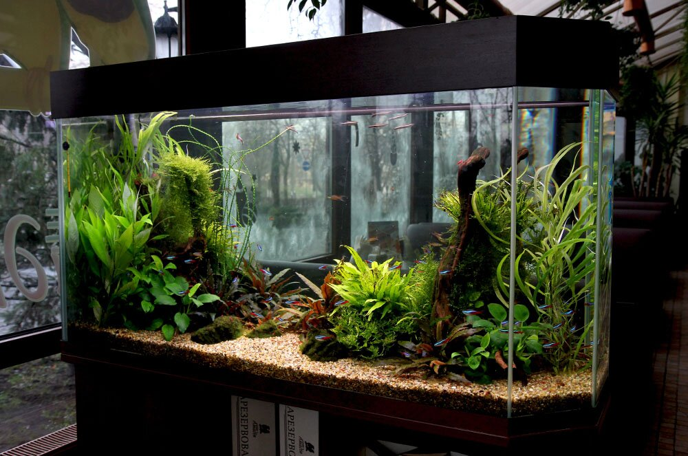 Aquarium Decoration Design : Fish tank decorations that will inspire you