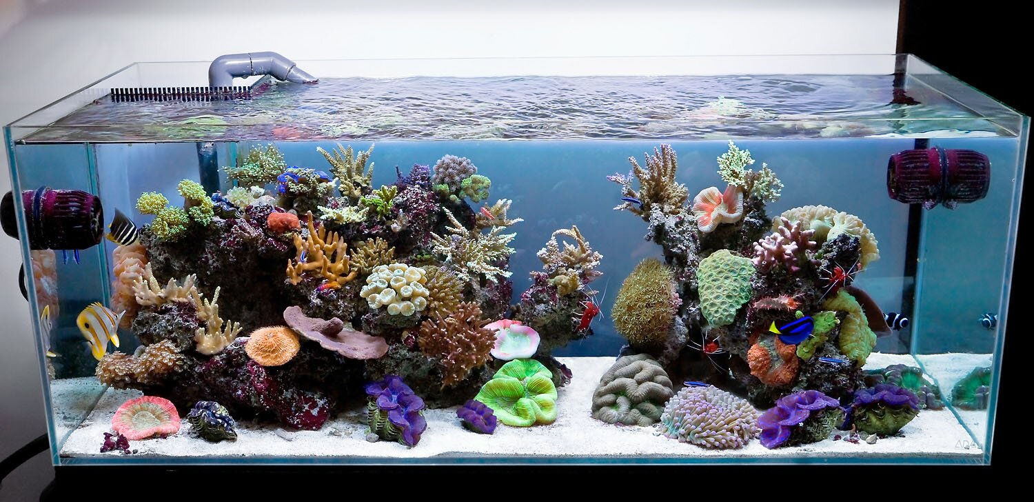 Funny Fish Tank Decorations 16 Fish Tank Decorations That Will Inspire You Mostbeautifulthings