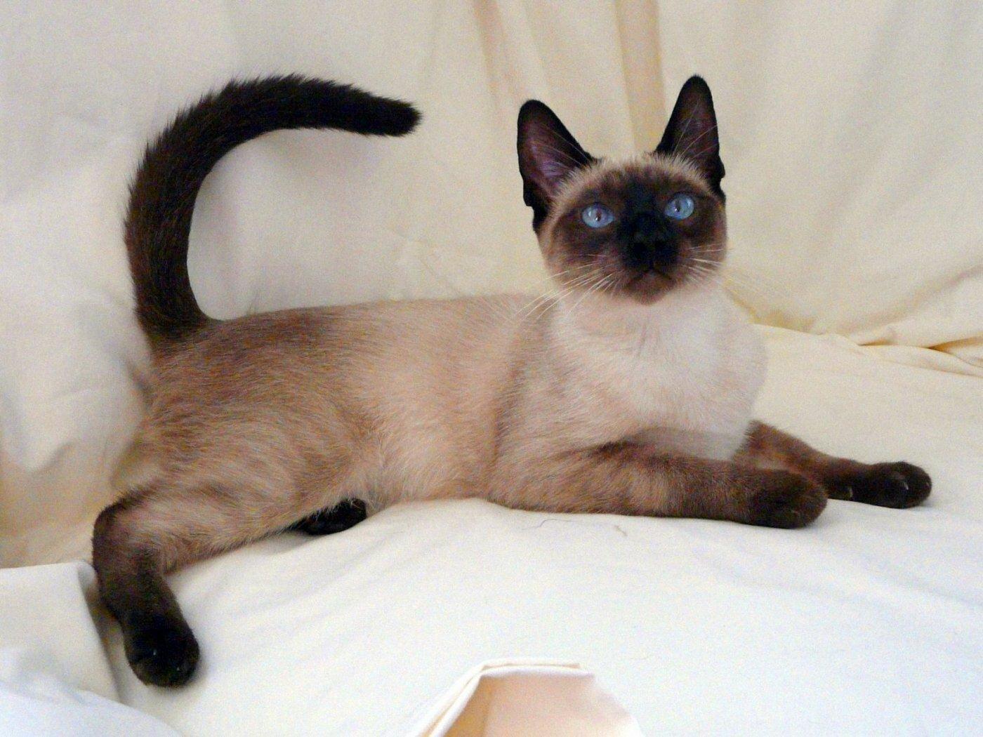 kitten for sale bay area