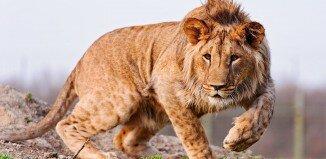 wildlife 1 326x159