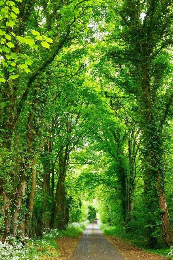 17 selected beautiful landscapes mostbeautifulthings for Most beautiful garden trees