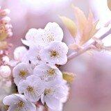 The best flower photos
