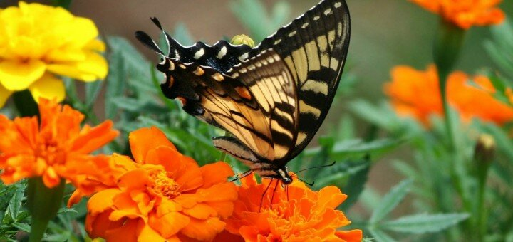 30 the most beautiful butterflies