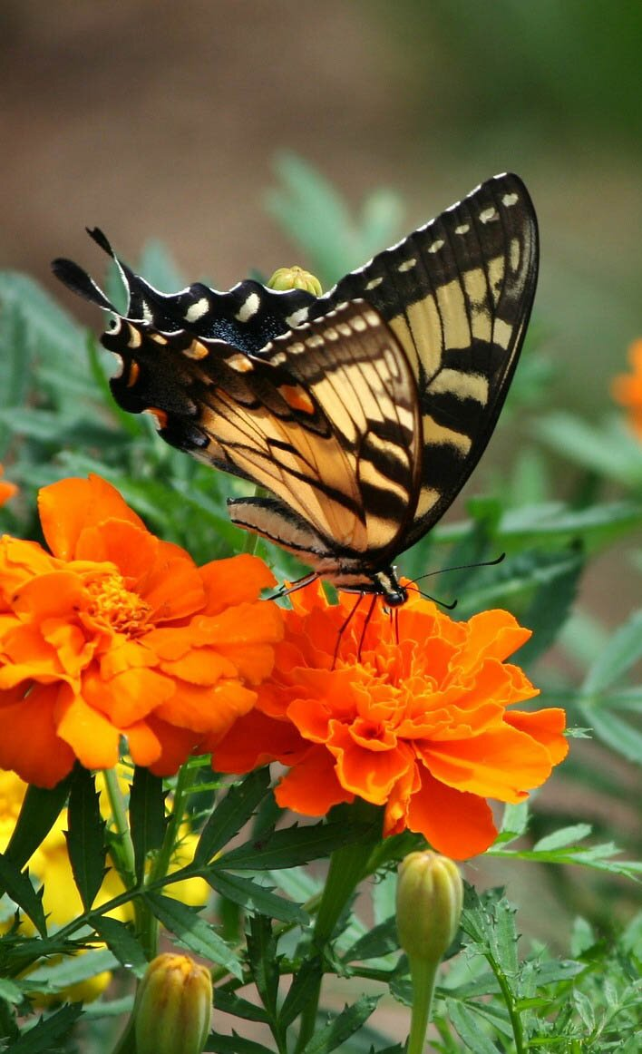 Orange Flowers With Butterfly, 30 The Most Beautiful Butterflies